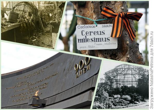 Приказано выжить! Ботанический сад во время блокады