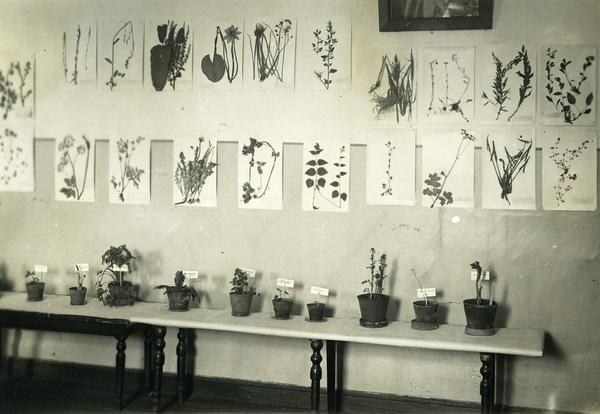 Экспозиция для лекции о съедобных дикоросах во время блокады. Фото из архива Ботанического сада botsad-spb.com