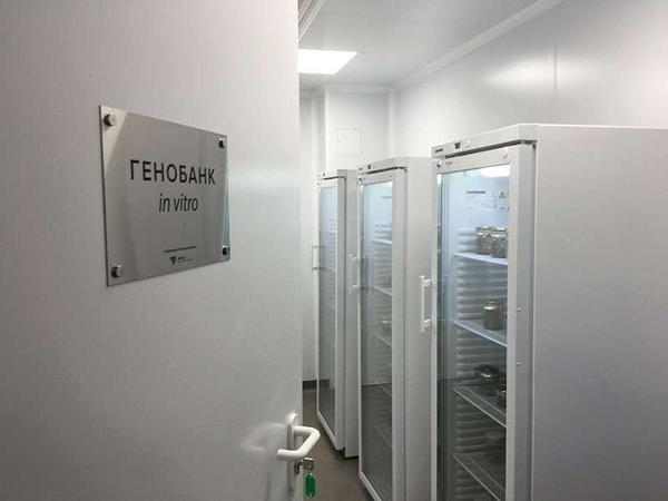 Лаборатория in vitro в Никитском ботаническом саду. Фото с сайта awt.ru