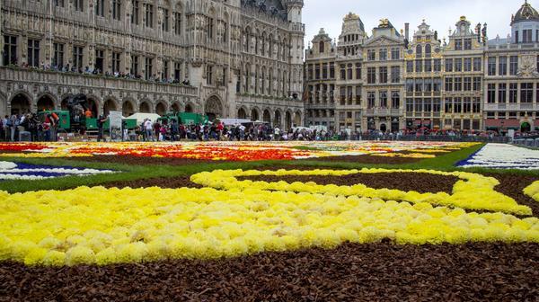 Цветочный ковёр. Фото с сайта flowercarpet.be