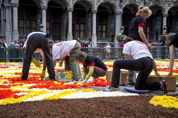 Бегония - благодатный материал для создания цветочных ковров. Фото с сайта flowercarpet.be