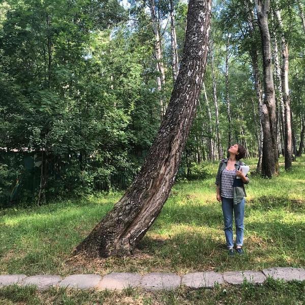 Вашему дереву нужен доктор? Спешите на консультацию к специалистам. Фото с сайта facebook.com/treedoctor.msk