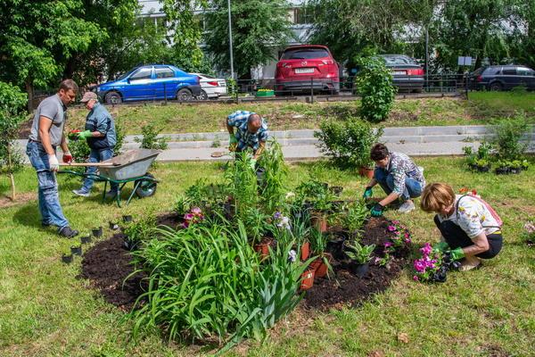 Хотите сажать цветы - получите разрешение. Фото участников акции Давай клумбу! с сайта amcult.ru