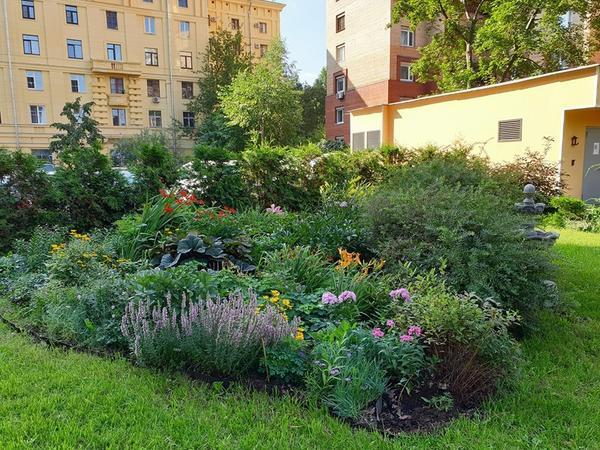 Московский двор-сад. Фото Евгении Фирсовой