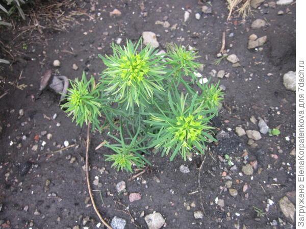 Подскажите название этого растения.