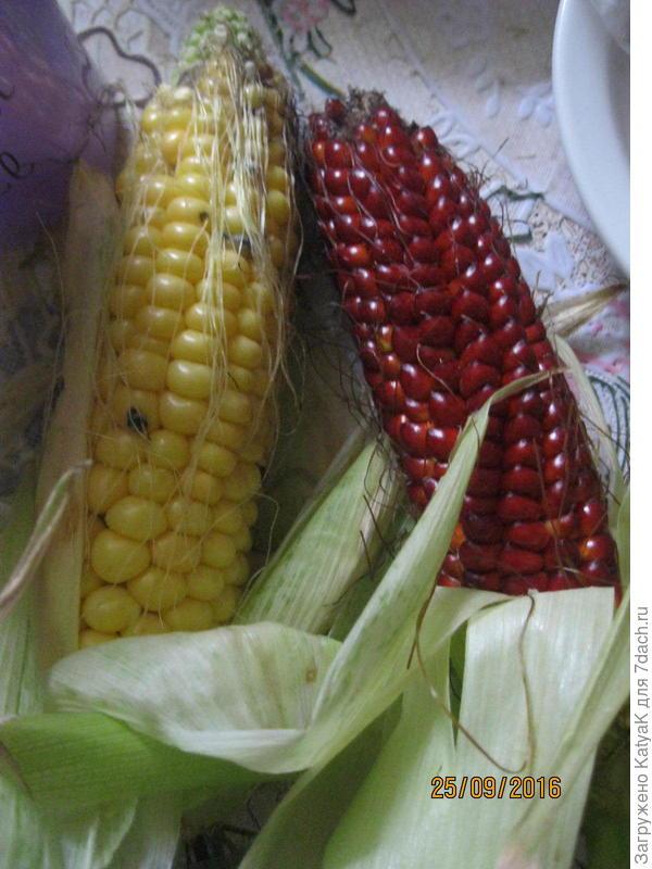 красная кукуруза