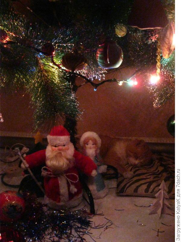 Кот под охраной Деда Мороза)))