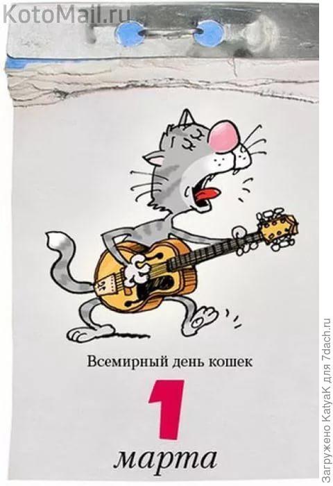 классический мартовский кот