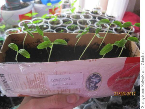 томаты от партнера гордость застолья