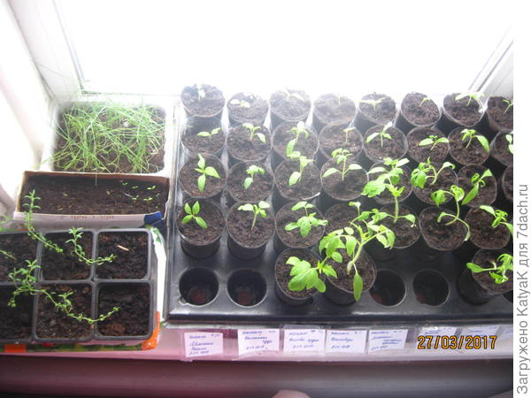 томаты лаванда лук вербена