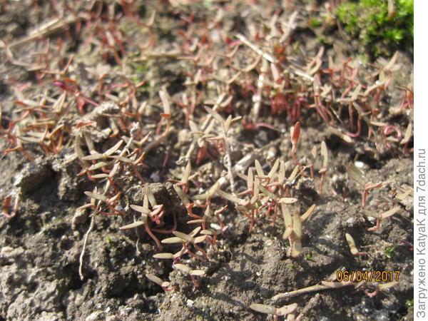 всходы неизвестного растения