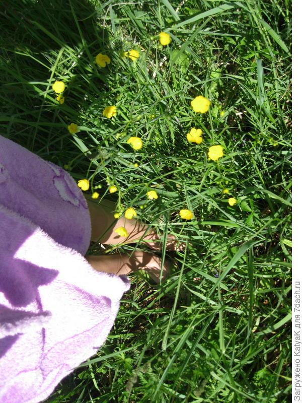 трава для покоса