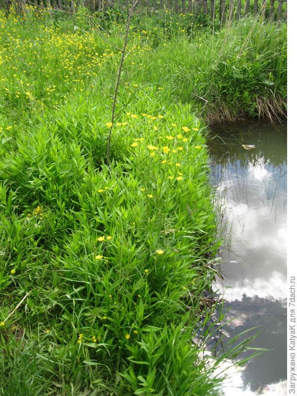 трава около водоема Husqvarna 128R