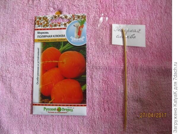 Круглая морковь Полярная клюква
