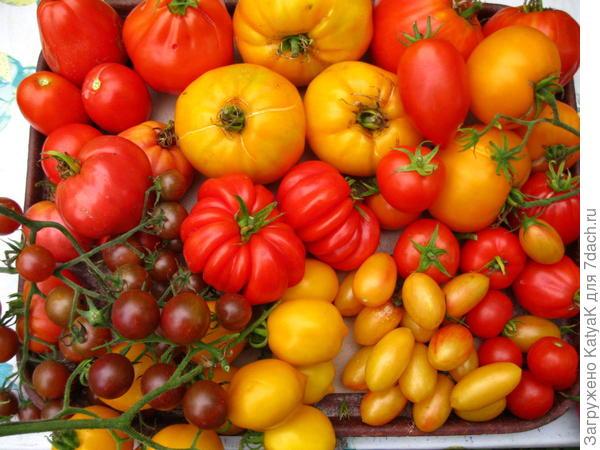 томатный бум