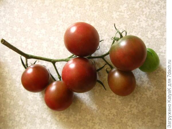 2 августа, 6 из 7-ми плодов готовы к употреблению