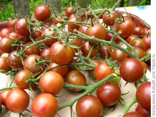 диковинка урожай