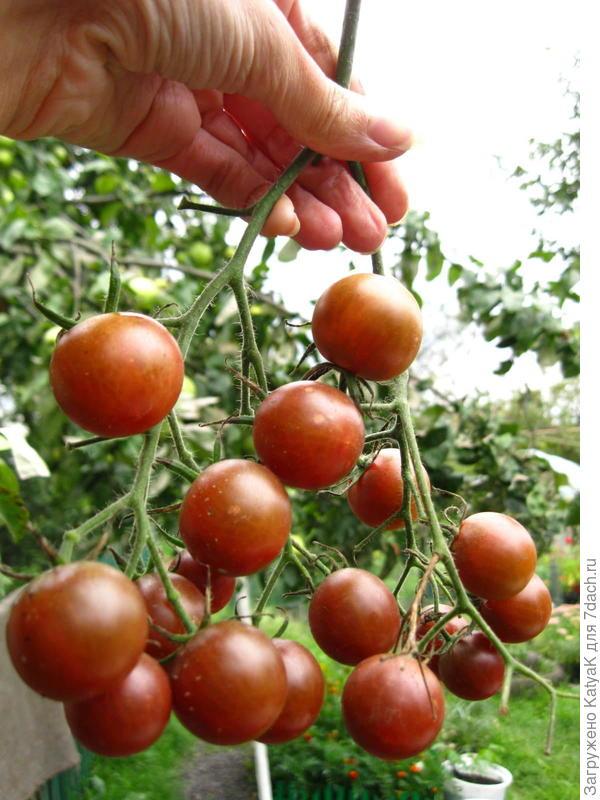 30 августа 17 плодов