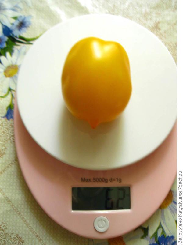 Один томат сняла для дегустации и взвешивания, под средний по размеру.