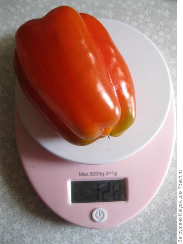 Вес плода 128 граммов