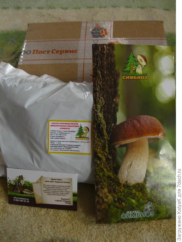 приз мицеллий грибов