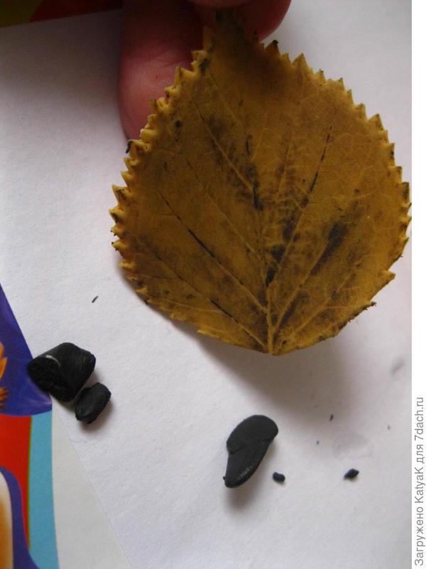 состариваем листок