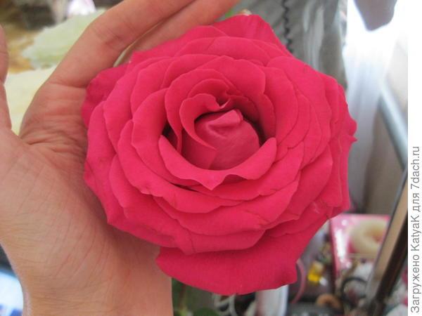 Вот тут на фото видна серединка цветка