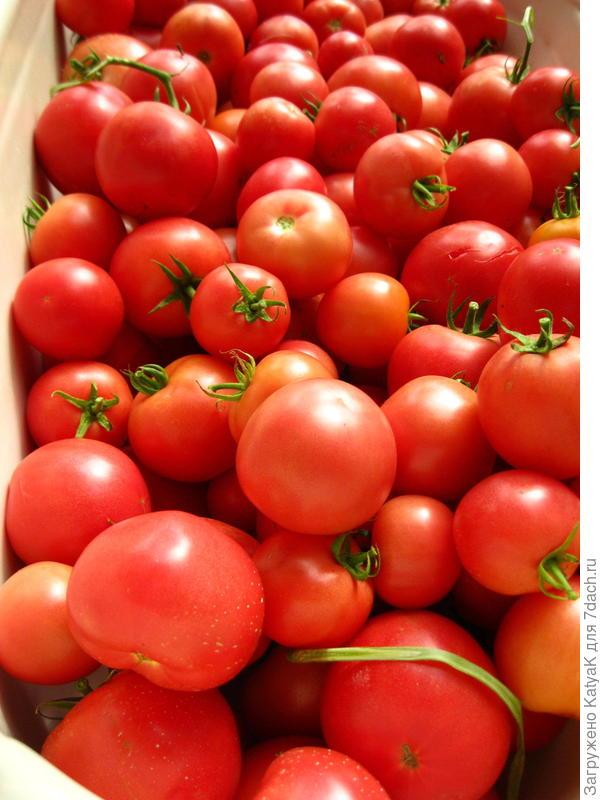 вот томаты этой серии в ванной
