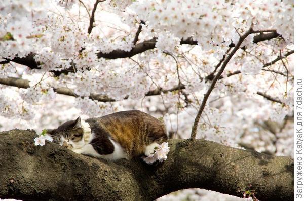 желаю всем такую весну- красивую и безметежную!