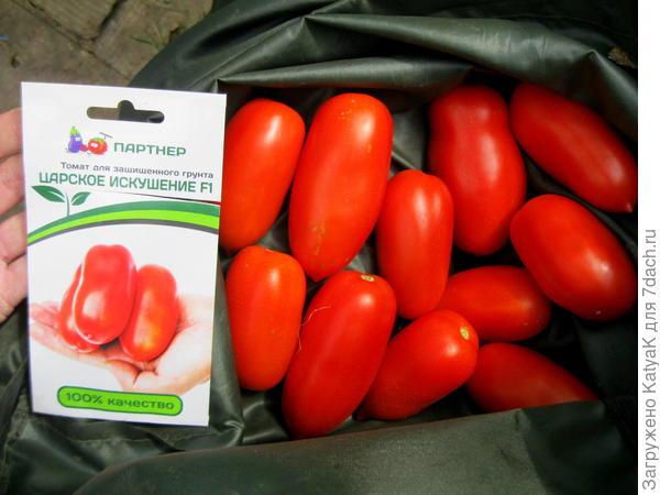 томаты Царское искушение