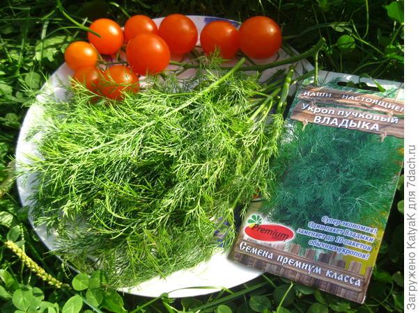 Укроп 'Владыка' от Премиум Cидс: оценим зелень на вкус, цвет и вес!