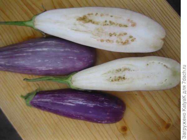 Баклажан 'Полосатая семейка' F1 - мини-овощ. Итоги