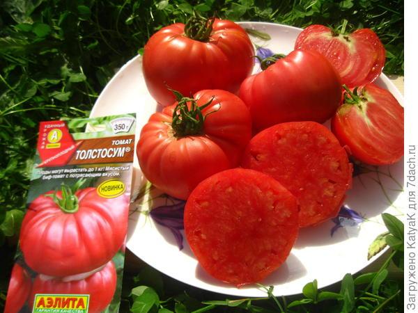 Томат 'Толстосум' - самый мясистый из биф-томатов на моей практике. Итоги
