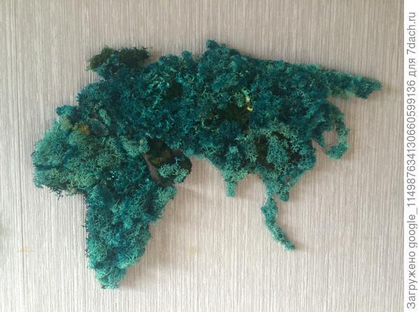 Ягель стабилиз в глицерине и окрашен зеленкой