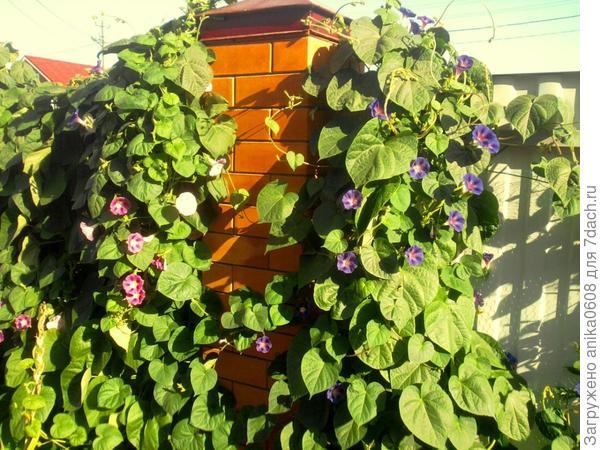 Как ухаживать за виноградом весной чтобы был хороший