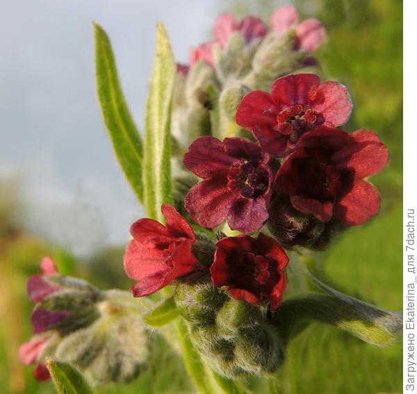 цветочки близко- какая красота