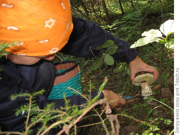 Вот подружка нашла грибок.