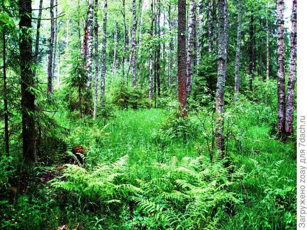 А в лесу то благодать.