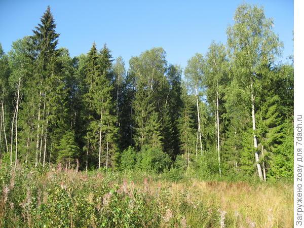 Ну вот и нагулялись по лесу, можно и отдохнуть.