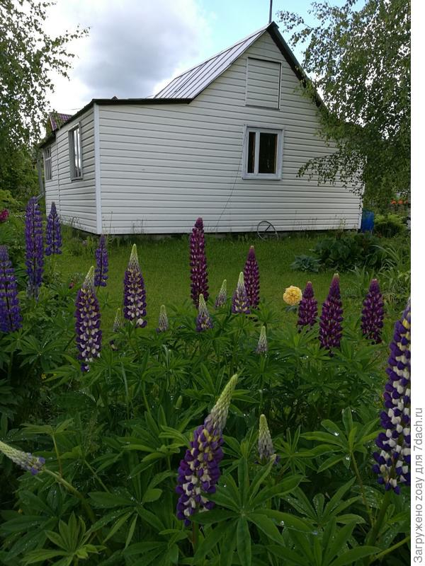 Вот за домом грибное место. Может кто захочет у себя поселить грибочки.