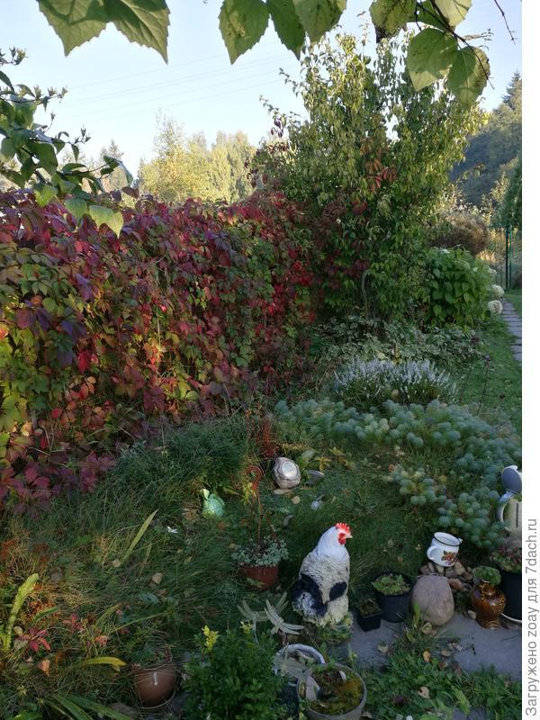 А от соседей прикрыться хорошо девичьем виноградом.