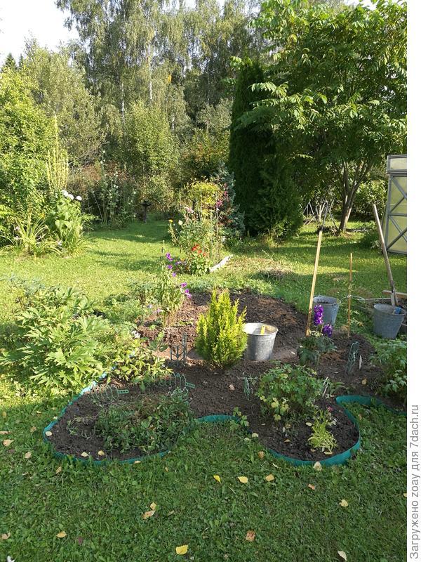 Вот решила выкопать шиповник и посадить розы еще, розы посадила поздно в сентябре, посмотрю как перезимуют.