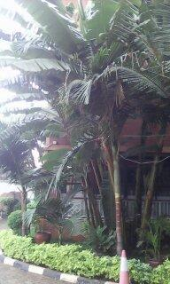 Это просто пальма