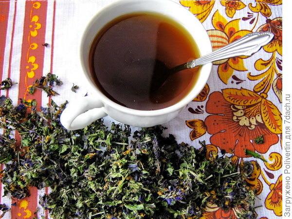 чай из марьянника
