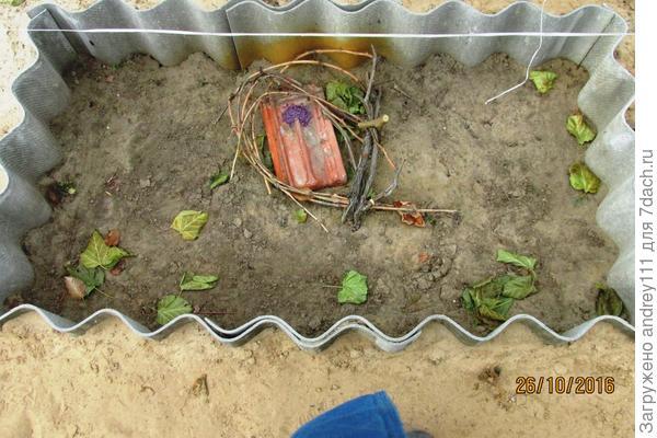 1) виноград уложен в ящике , пришпилен к земле, опрыснут 5% железным купоросом. На черепице отрава для мышей.