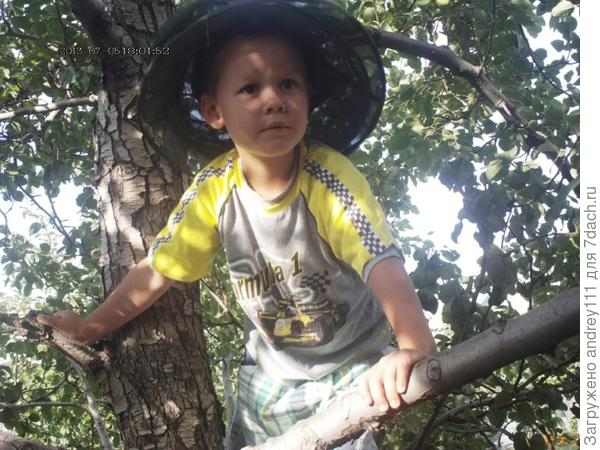 Мишка Квакин, гроза садов и огородов