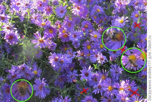 Там где нолики -пчелки, там где крестики - фантомы пчелок из увядших цветов.