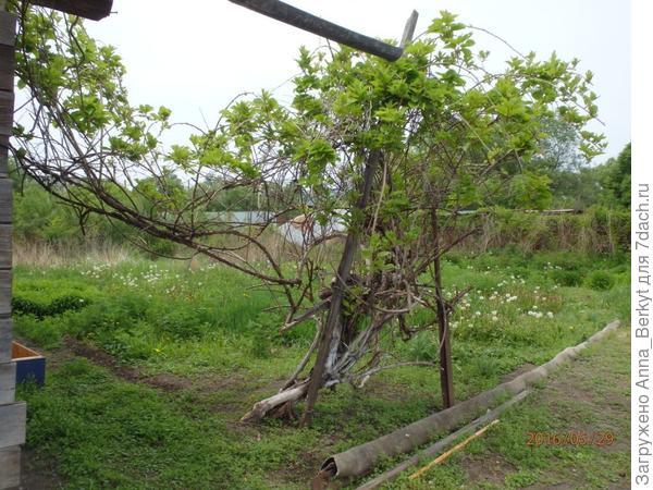 17. незнакомое дерево