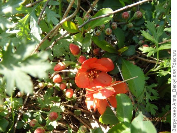 8. загадочное растение