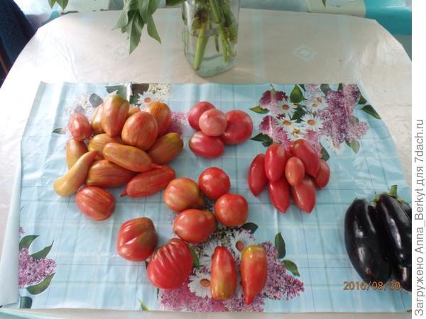 69. помидоры